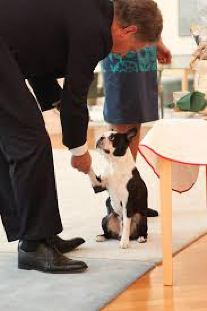 Cum a devenit câinele preşedintelui din Finlanda un FENOMEN pe internet