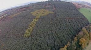 Pare o pădure obişnuită. Copacii ascund, însă, o mare ENIGMĂ. Secretul a fost luat în mormânt