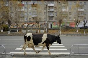 Foto: Alexander Petrosyan