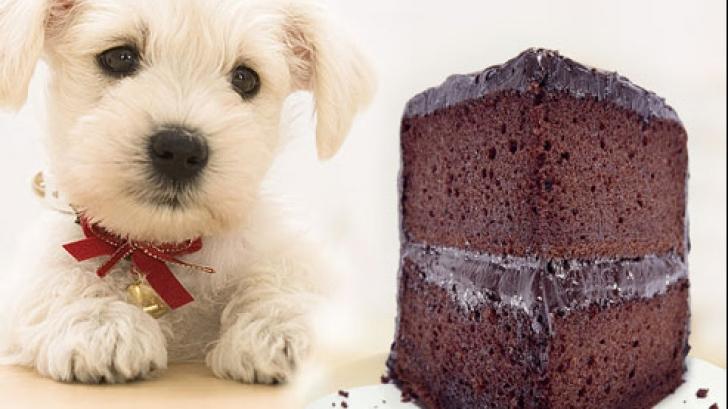 Ce se întâmplă dacă-i dai câinelui tău ciocolată. Efectul e foarte grav