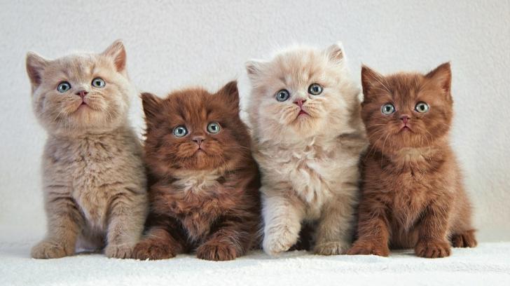 Dacă iubești pisicile, ai ocazia să miroși ca ele. Se lansează un parfum cu aromă de blană de pisoi