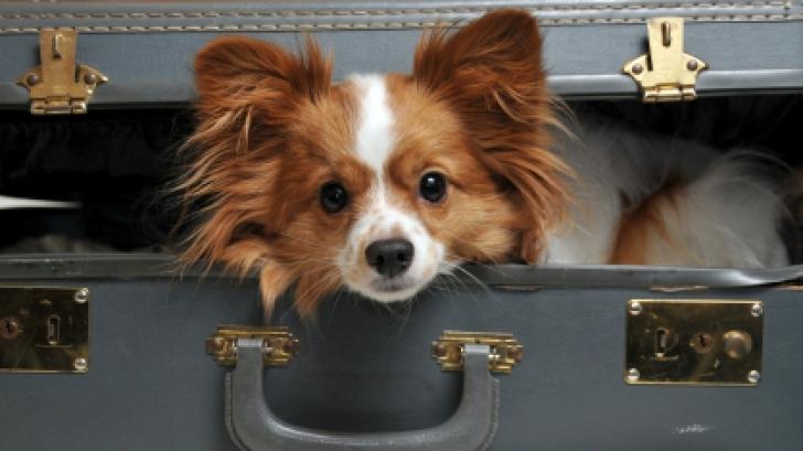 Detești vizitele la veterinar? La fel și câinii! Află care sunt cele mai sănătoase rase canine