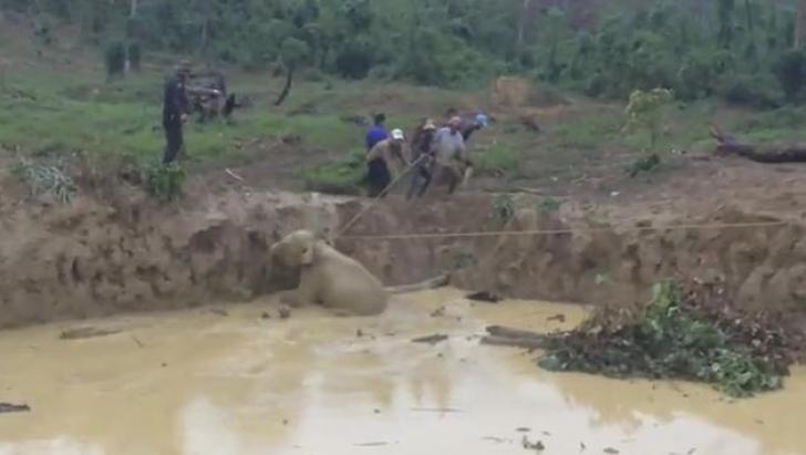Tulburător! O turmă de elefanţi a fost ajutată să scape miraculos dintr-o tragedie de proporţii