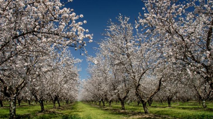 Echinocţiul de primăvară. Cum sunt afectate zodiil