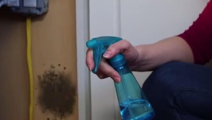 Un banal produs te scapă de mucegai definitiv! Uite cât de benefic este