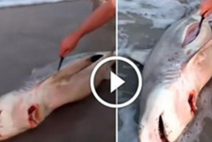 Ce era în burta rechinului