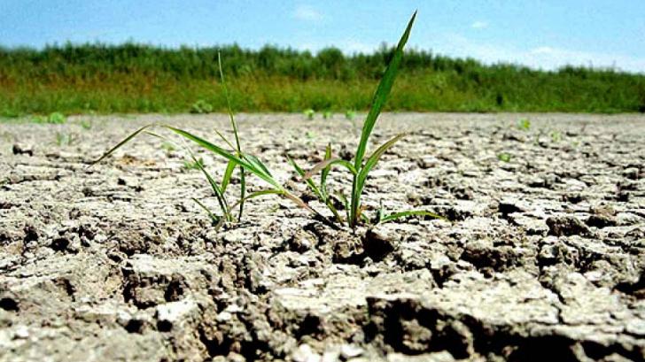 Adrian Oros dă asigurări că va fi suficient grâu pentru panificație
