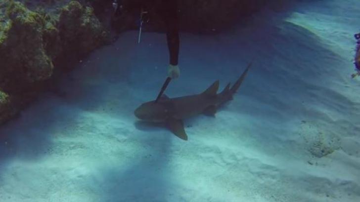 Imagini șocante! Un scufundător salvează un rechin care avea un cuțit de bucătărie înfipt în cap