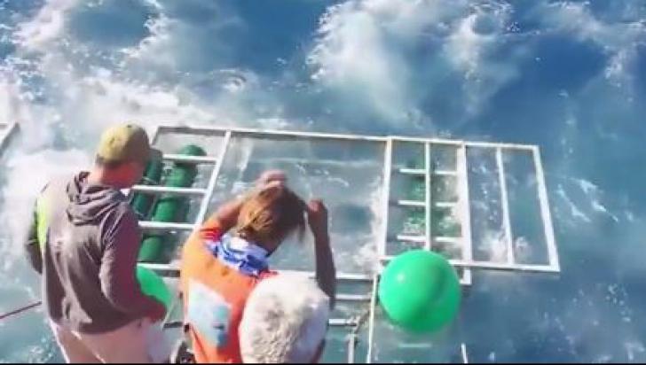 Un rechin a intrat în cușca unui turist care făcea scufundări. Ce a urmat întrece orice imaginație