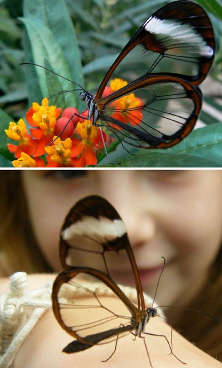 PAR IREALE! Fotografii superbe cu fiinţe transparente