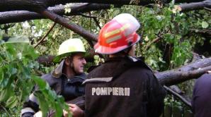 Copaci căzuți din cauza vremii rele