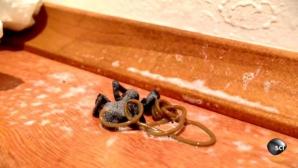 A omorât un păianjen cu insecticid. Când a văzut ce a ieşit din el a rămas şocat