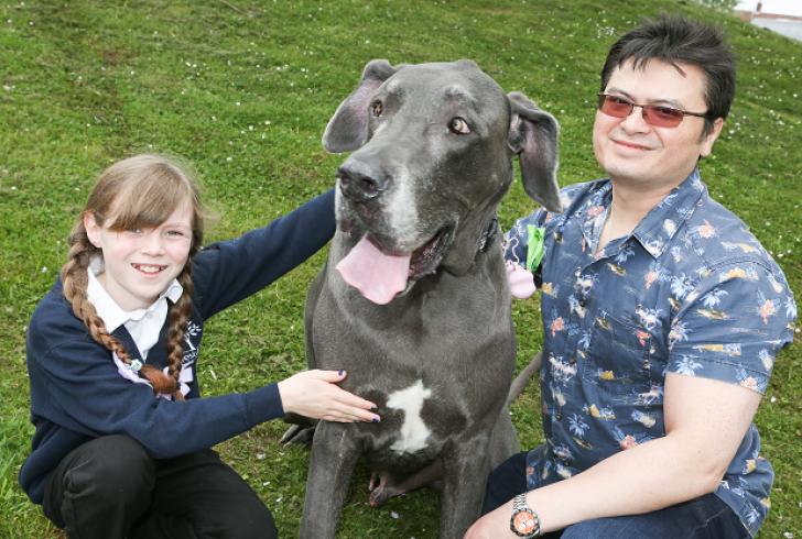 Cel mai MARE câine din Anglia cântăreşte cât un pui de elefant şi iubeşte pisicile