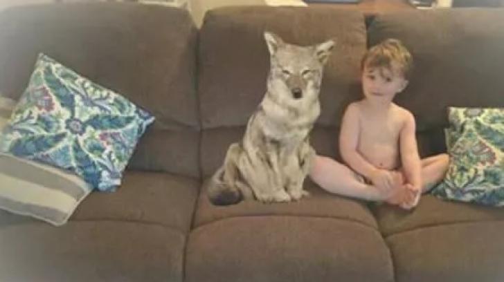 """I-a cumpărat fiului un câine.I-a trimis soţului o poză.Bărbatul, SPERIAT: """"Fugiţi, acela nu e câine"""""""