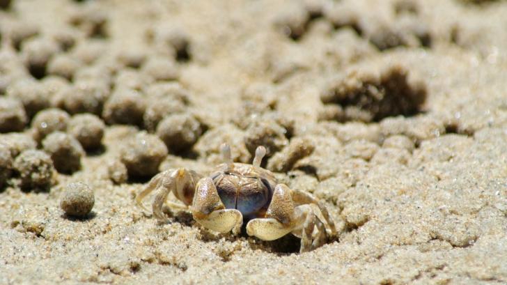 O plajă din Cuba a fost invadată de milioane de crabi