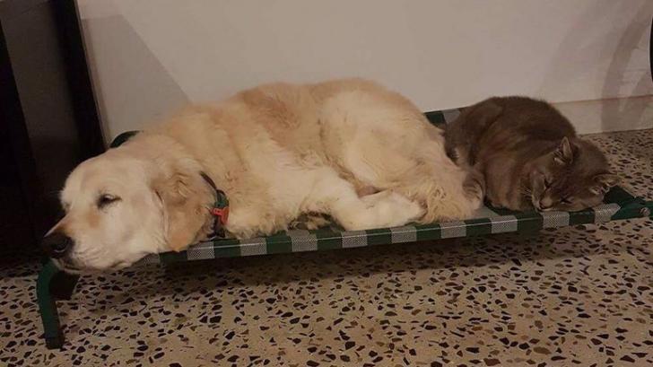 Imagini virale! Expresii amuzante ale unor câini după anestezie