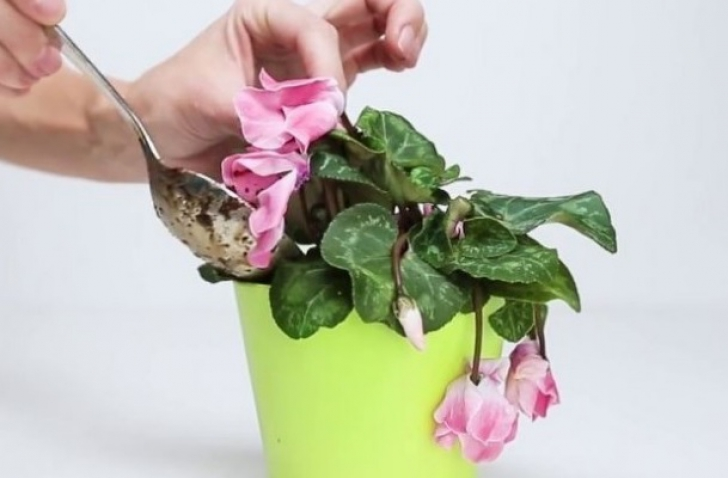 3 ingrediente care îţi readuc la viaţă florile ofilite