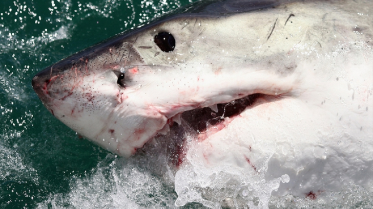 ȘOCANT! I-a tras un pumn și astfel salvat-o din colții rechinului