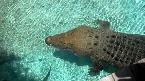Preot înghițit de crocodili