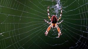 De ce este PĂCAT să omori păianjenii. Dacă faci asta, vei atrage asupra ta...