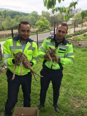 Doi poliţişti din Vâlcea au găsit în pădure doi pui de căprioară rătăciţi. Ce a urmat este emoţionat