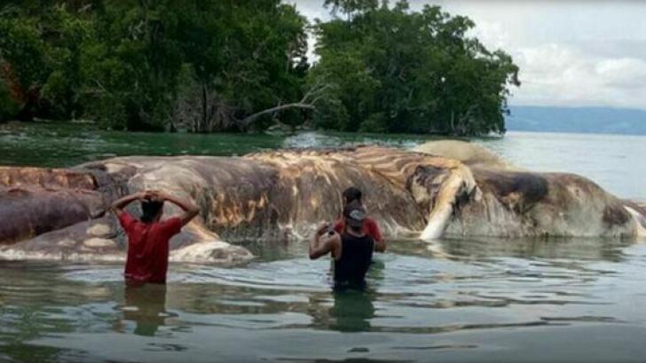 Rămășițele unui monstru marin neidentificat, găsite de localnicii speriați pe plajă