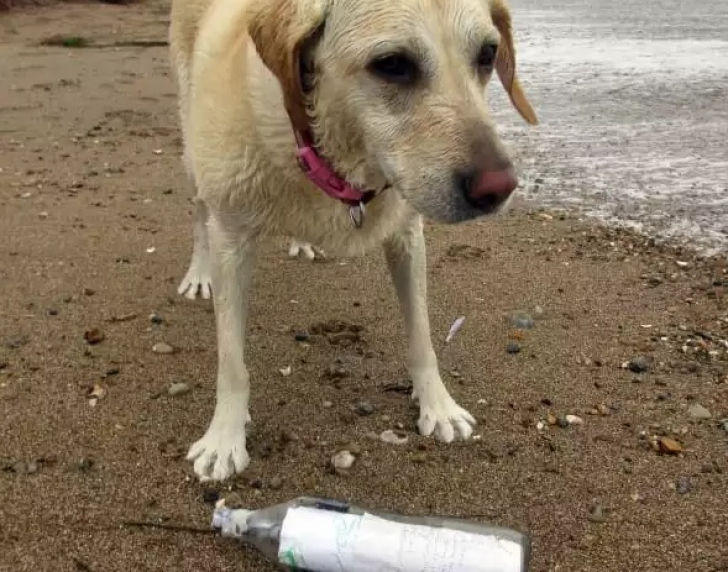 Câinele lui a găsit pe râu o sticlă cu o scrisoare înăuntru. Stăpânul a citit-o şi a ÎNCREMENIT