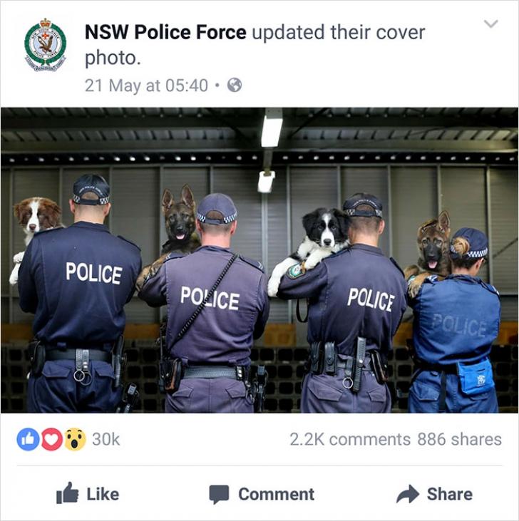 Acești polițiști ar trebui arestați pentru că sunt prea amuzanți! Râzi cu lacrimi