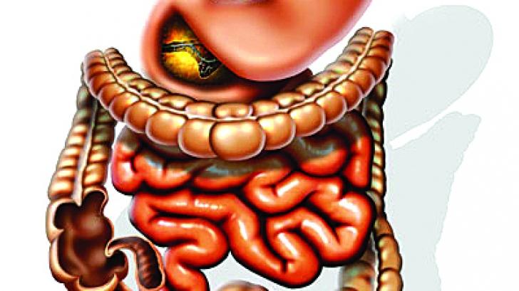 Intestinul subțire