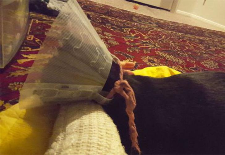 Ce a găsit un veterinar în burta unei pisici? Stăpâna ei a fost STUPEFIATĂ