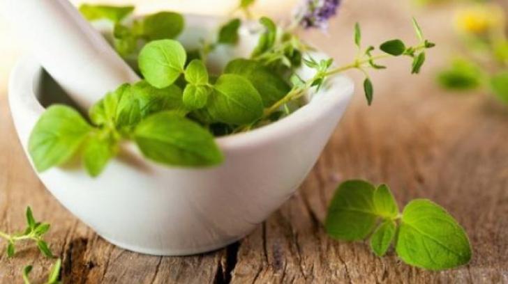 Plantele care ne ajută să scăpăm de răcelile sezoniere