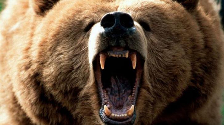 Doi ciobani au fost atacaţi de un urs, la o stână din Miercurea Ciuc