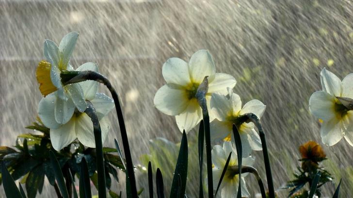"""Meteorologii anunță """"gerul din aprilie"""". După 20 de grade cu plus, vine lapovița de Paște"""