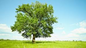 Copaci, efecte energetice
