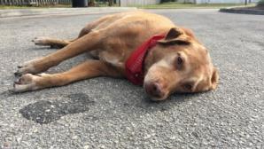 accident, câine, Florida