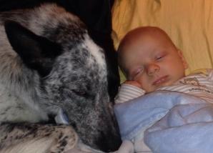 <p>Şi-au lăsat copilul singur cu câinii. Când s-au întors, părinţii au găsit...</p>