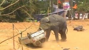 Elefantul nervos