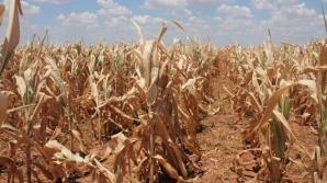 Ultimele două luni de vară, EXTREM de călduroase. Cum va fi vremea în septembrie. Prognoza pe 3 luni