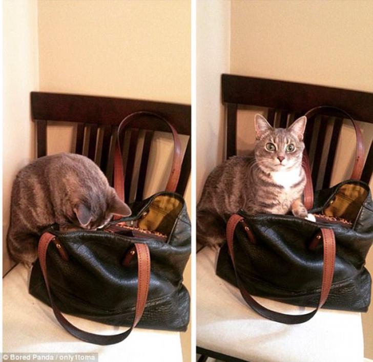 Acestea sunt cele mai amuzante pisici din lume! Imaginile pe care trebuie să le vezi neapărat