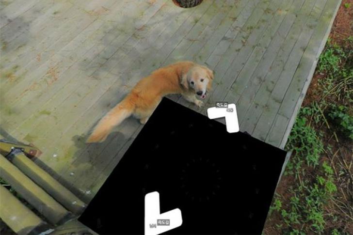 Ăsta este cel mai adorabil câine din ISTORIE! A făcut furori pe internet cu gestul său