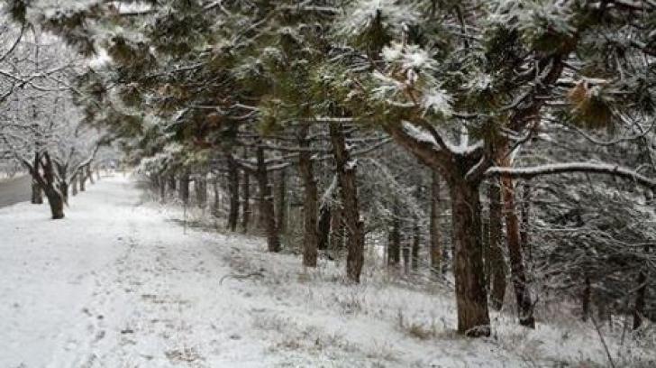 Specialiștii dermatologi avertizează: două tipuri de cancer sunt foarte întâlnite iarna