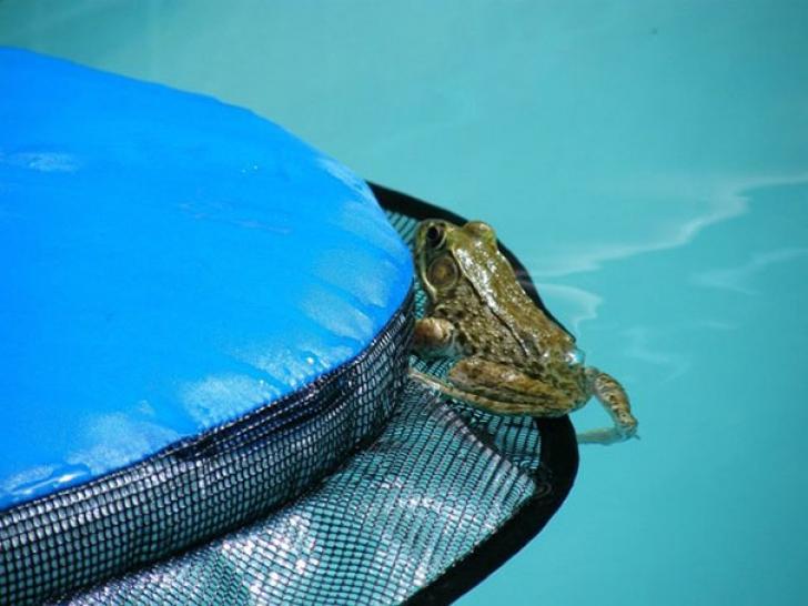 Obligatoriu pentru cine are piscină! Această invenție a salvat viața multor animale rătăcite