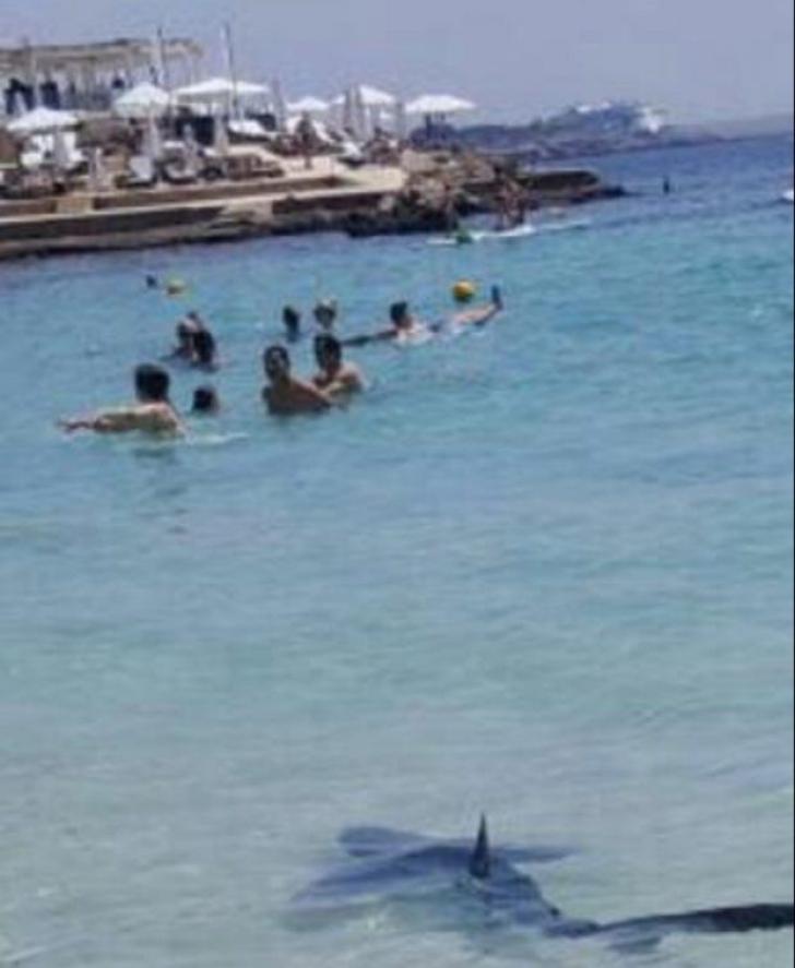 ȘOCANT! Un rechin enorm a fost omorât după ce a terorizat turiștii dintr-o stațiune spaniolă