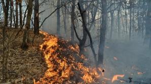 Incendiu de pădure VIOLENT. Sute de pompieri și militari se luptă să controleze flăcările