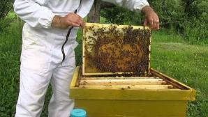 Atacați de albine