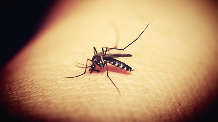 De ce te ciupesc ţânţarii. Iată cum îşi aleg victimele