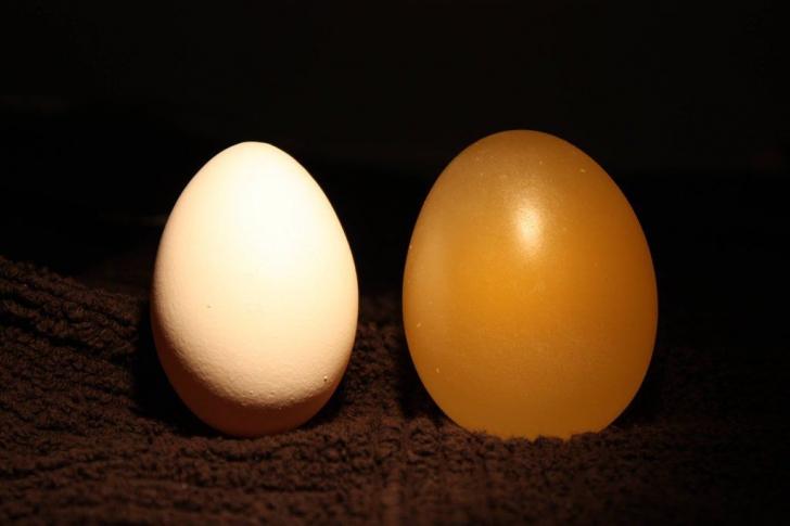 Experiment UIMITOR! Ce se întâmplă când lași un ou în oțet timp de două zile