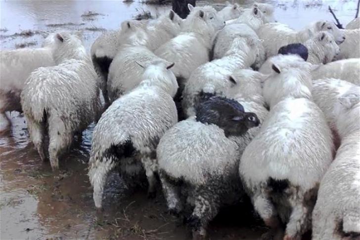 Imagine ULUITOARE: aşa ceva nu s-a mai văzut în NATURĂ. Cum s-au salvat iepurii de viitură