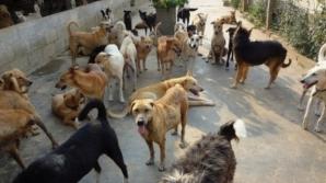 Marian Dragomir a anunţat că instituţia se va ocupa de problema câinilor maidanezi.