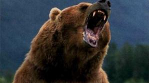 Un cioban a fost atacat de un urs, în judeţul Prahova